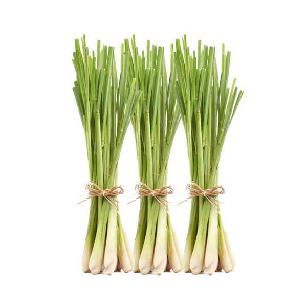 v-lemongrass-per-pack