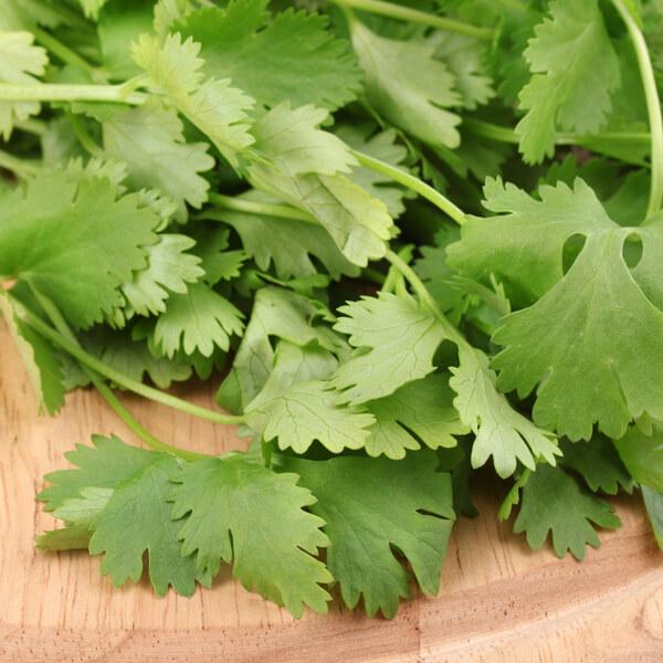 v-thai-coriander-per-pack